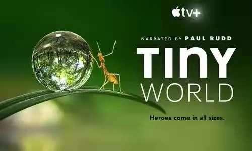 豆瓣9.5分!这部惊艳全世界的自然纪录片《小小世界 》,最适合和孩子一起观看!